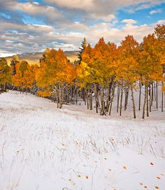 Mueller State Park,Colorado,Pikes Peak,snowstorm, photo by Stan Rose