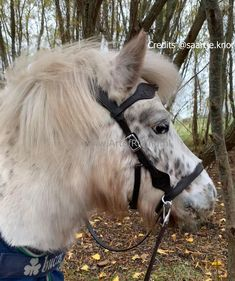 🤩Side Pull Dandy also in small sizes available 😍 This bitless bridle has a western look and delivered with full leather reins with clip. The Side Pull Dandy is available in black, brown, and natural colors and in the sizes, Mini, Shetty, and pony🥰 Did you know that we also have a pony shop? Mini Pony, Western Look, Natural Colors, Horse Tack, Dandy, Headpiece, Black And Brown, Carving, Horses