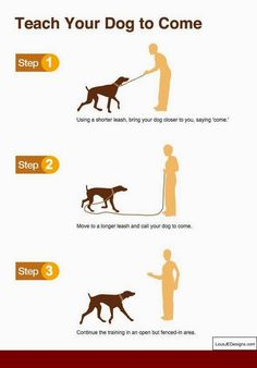 Useful Dog Care And Training Tips - Explore tips and advice for every aspect of your dog's care. Learn how to take care your dog and train your dog. Puppy Training Tips, Training Your Dog, Training Collar, Potty Training, Service Dog Training, Training Academy, Training School, Training Classes, Crate Training