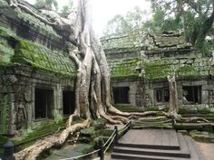 6475356-jungle-temple-0.jpg (800×600)