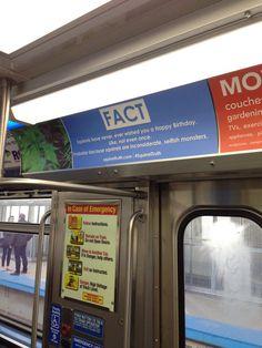 #SquirrelTruth || chicago train