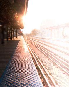 Early morning light, making tracks. #Chicago. #Flowers #Florist