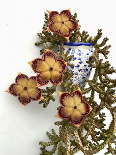Edithcolea grandis (Persian Carpet Flower) is a succulent perennial with leafless and richly branched stems. Unusual Plants, Exotic Plants, Cool Plants, Weird Plants, Succulent Gardening, Garden Plants, House Plants, Flower Gardening, Cacti And Succulents