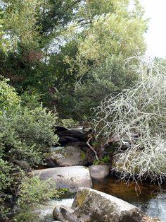 """Le charme du """"Bois d'amour"""" à Pont-Aven"""