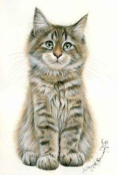 Main Coon Irina Garmashova Cats