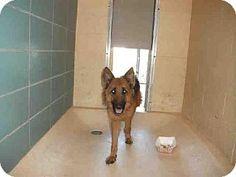 Beagle dog for Adoption in Tampa, FL. ADN-712803 on PuppyFinder.com Gender:  Female. Age: | Dogs for Adoption | Pinterest | Beagle dog, Beagle and  Adoption