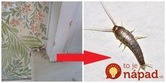Pavúky a všetku háveď to vyženie z vášho domu: Najlepšia rada, ako udržať byt bez hmyzu na celé mesiace!
