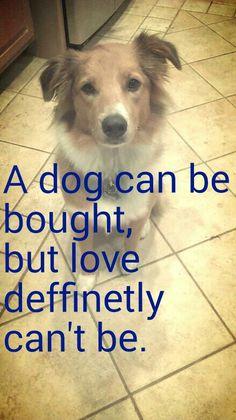 Free Puppies For Adoption, Love, Animals, Amor, Animales, Animaux, Animal, Animais