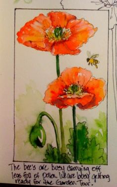 Sketching in Nature: Poppies are bloomin' Go thru list of correspondents on left for other artists. Watercolor Poppies, Watercolor Sketchbook, Pen And Watercolor, Watercolor Artwork, Nature Sketch, Bee Art, Flower Cards, Botanical Illustration, Art Lessons