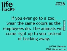 Life Hack: Going to the Zoo...