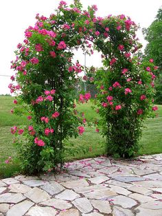Beautiful rose arbor.
