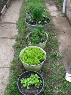Garden fresh herbs and recipes that use them...