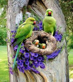 A 156 pieces jigsaw puzzle from Jigidi Pretty Birds, Cute Birds, Beautiful Birds, Animals Beautiful, Exotic Birds, Colorful Birds, Exotic Pets, Animals And Pets, Cute Animals