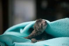First Ever Baby Sloth Delivered by C-Section! (PHOTOS)