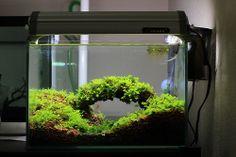 One of the coolest aquarium setups I have ever seen!