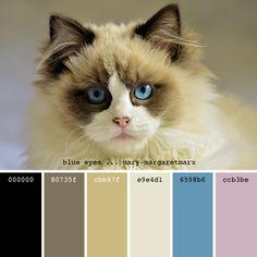 Color Balance, Color Harmony, Colour Pallette, Color Combos, Room Color Schemes, Paint Samples, Cat Colors, Color Inspiration, Design Art