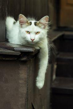 "magical-meow: ""OksanaVer ~ Happy Caturday :) """
