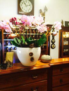Linz Hotel Wolfinger Austria, Planter Pots, Classic, Linz, Flowers, Derby, Classic Books, Plant Pots