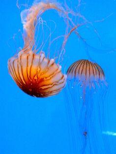 Jelly fish and more at the Baltimore Aquarium. Plus more Inner Harbor fun.