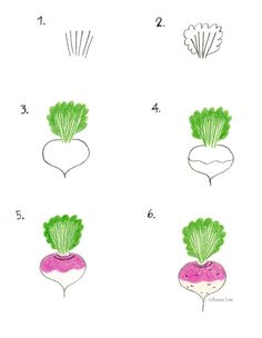 How to Draw a Turnip by Anais Lee