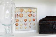 Framed seashell