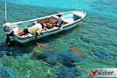Sea Turtles at Hol Chan Marine Reserve, Ambergris Caye, Belize