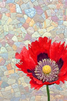 'Red Poppy Flower Opened Up' Fine Art Photography by Valerie Garner An open red Oriental poppy against a faded, multi-colored stone wall creates a different effect for this floral fine art print.
