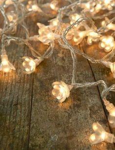 . . . twinkling lights ~