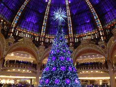 Christmas Trees In France | Its beginning to look a lot like Christmas…