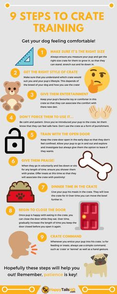 Here are 9 easy tips/ steps to crate training your dog! Make sure to check out our website for more info and find out which are the best dog training for your dog. Looking for the best dog training ? Get our Free Training for your dog! Puppy Training Tips, Training Your Puppy, Potty Training, Training Classes, Training Pads, Training Videos, Training Collar, Agility Training, Dog Agility