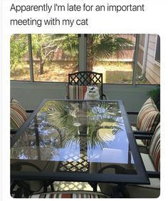 Just 25 Hilarious Memes For a Purrfect Caturday - World's largest collection of cat memes and other animals Cute Funny Animals, Funny Cute, Cute Cats, Very Funny Pictures, Funny Animal Pictures, Meme Pictures, Animal Pics, Funny Pics, I Love Cats