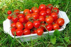 Skúste vymeniť hriadku kyprej pôdy za tucet vreciek substrátu a môžete očakávať lákavú úrodu na miestach, kde sa zvyčajne zelenina nepestuje. Vegetables, Food, Veggie Food, Vegetable Recipes, Meals, Veggies