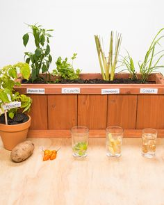 How To Regrow Vegetables From Groceries