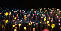 Bruce Munro: LIGHT. A fully lighted exhibition at Nicholas Conservatory & Gardens.