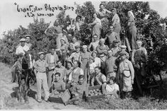 Citrus pickers Israel