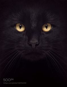 The Black Cat by annmiller1949 #animals #animal #pet #pets #animales #animallovers #photooftheday #amazing #picoftheday