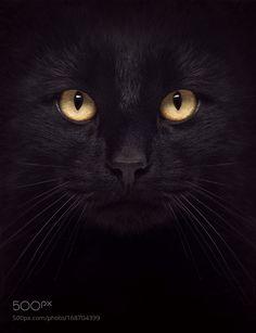 The Black Cat by annmiller1949 via http://ift.tt/2brKO9x
