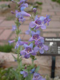 Denver botanic gardens native plant list