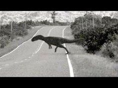 Dinosaur caught on Camera