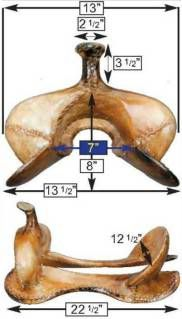 western saddle fit guide - Google Search