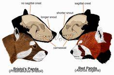 Znalezione obrazy dla zapytania red panda skull