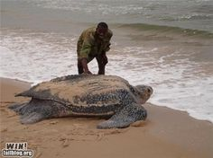 Giant Ancient Turtle. Imagine what's its seen in its lifetime!! Wow