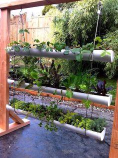 Drain Pipe Gardening