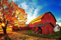 Barns and farms are a children's playground...I know they were mine...and they still fascinate me even today!