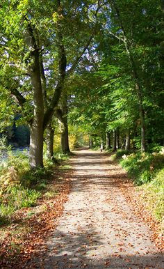 Lady Mary's Walk Crieff...just one of the wonderful walks nearby