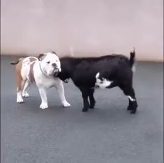 - What occurs when an unstoppable pressure fulfills an immovable item – astonishing gif funny , kids gifs , funny laughing , gif gif Cute Funny Animals, Cute Baby Animals, Funny Cute, Funny Dogs, Animals And Pets, Cute Puppies, Cute Dogs, Puppies Puppies, Cute Animal Videos