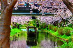 春散歩 by yuta_matchan