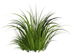 imagen, la hierba verde hierba imagen png PNG