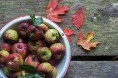 June Apple banjo tab + my apple picking gizmo