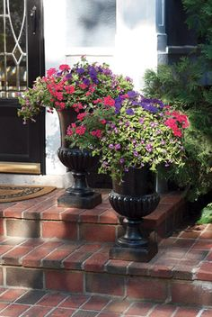 urns with beautiful annuals, verbena, torenia and petunia. Combinations